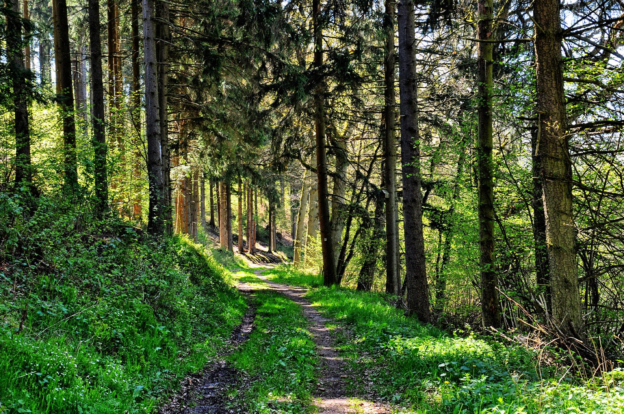 Tal des Diefenbach