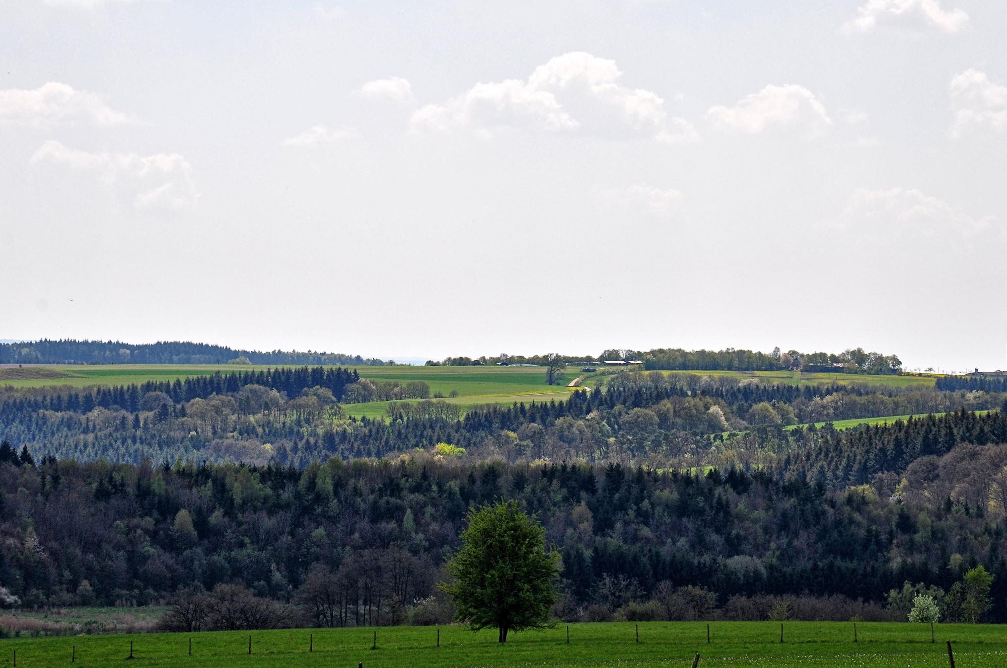 Vom Diefenbach zum Trautzberger Maar