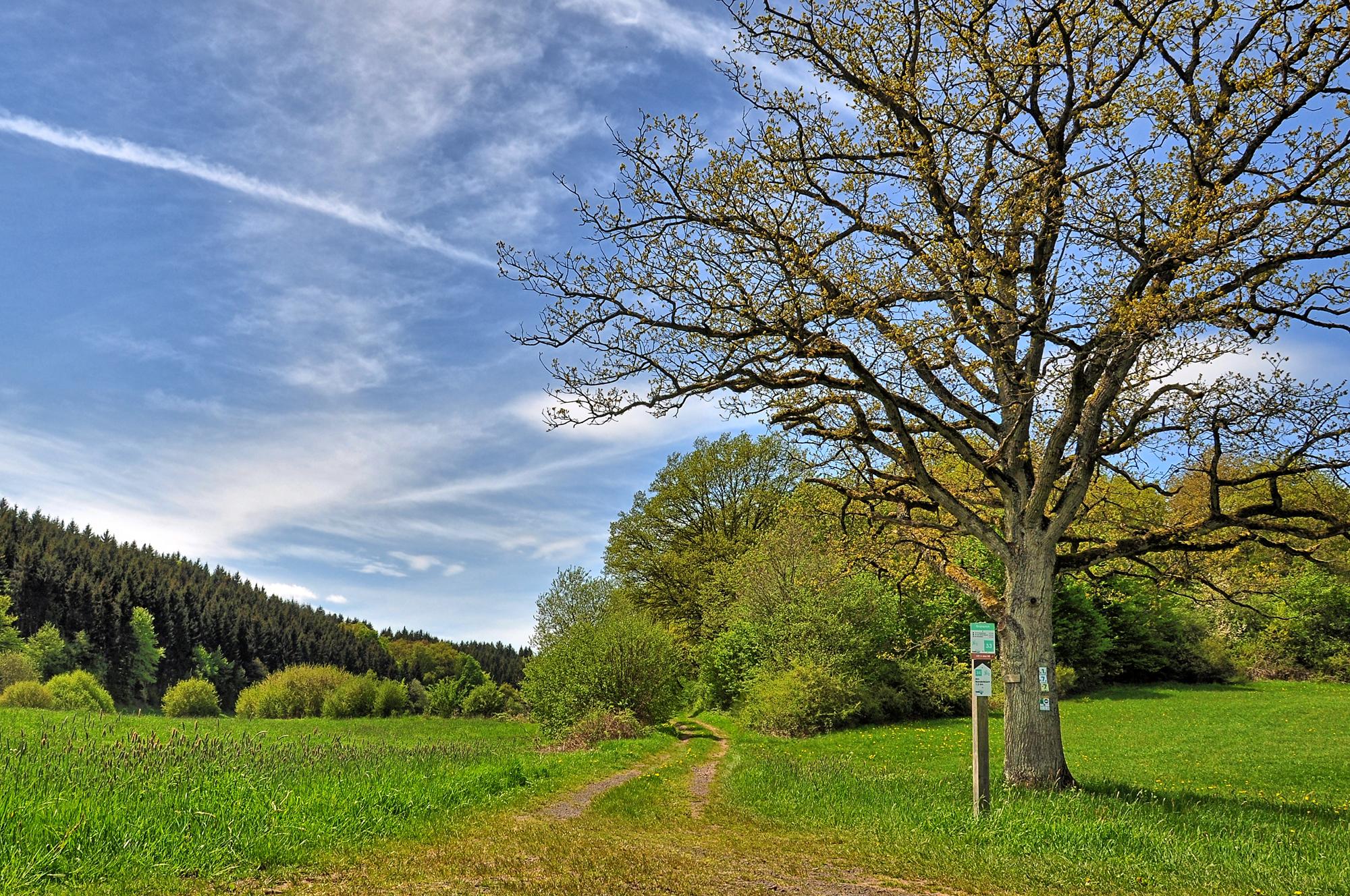 Strohner Schweiz