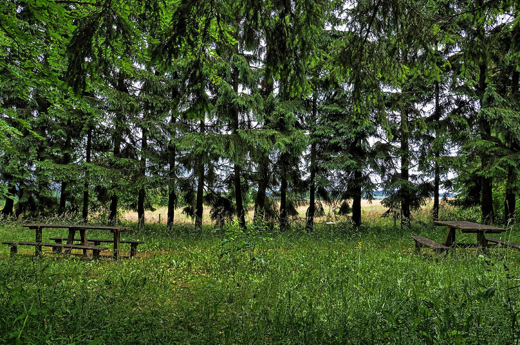 Holzmaar