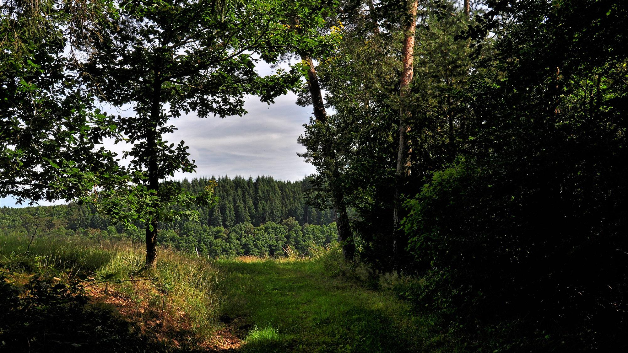 Apolloniaweg