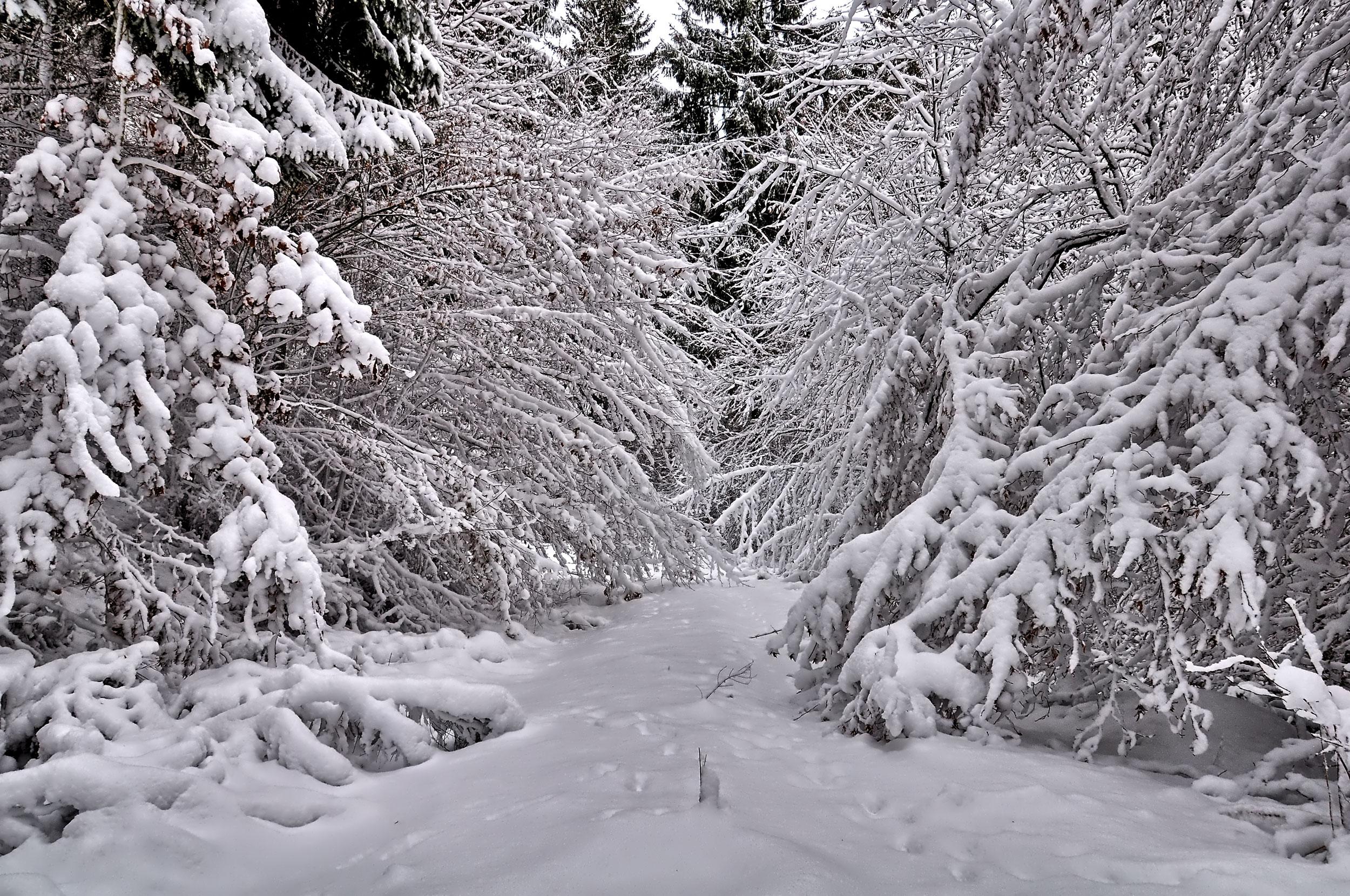 Winterwanderung durchs Sammetbachtal